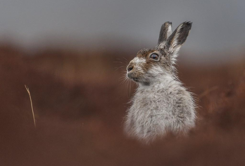 2016 British Wildlife Photography Awards Winning Photographs