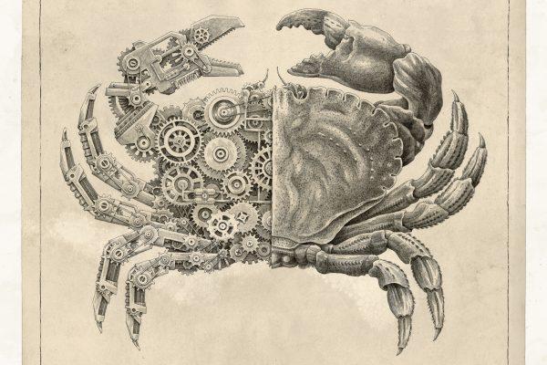 Crustacean Study by Steeven Salvat